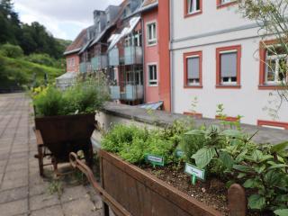 Tast-Riechgarte-Antoniushaus-Kloster_Oberzell